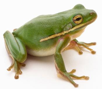 http://historicaldesign.com/wp-content/uploads/2014/09/frog-1.jpg