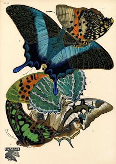 http://historicaldesign.com/wp-content/uploads/2014/11/174-B-Seguy-butterflies-.jpg