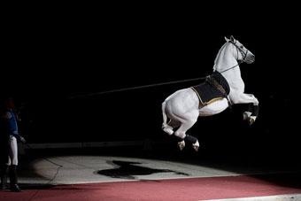 http://historicaldesign.com/wp-content/uploads/2014/11/lipizzaner-jumping-1.jpg