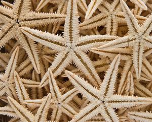http://historicaldesign.com/wp-content/uploads/2014/12/PBr-starfish.jpg