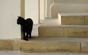 http://historicaldesign.com/wp-content/uploads/2015/04/black-cat-on-the-stairs-22795.jpg