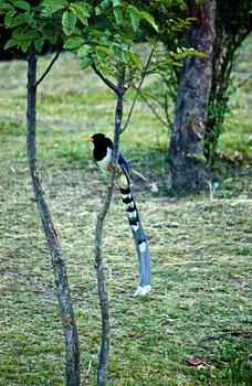 http://historicaldesign.com/wp-content/uploads/2015/09/172-B-Exotic-bird.jpg