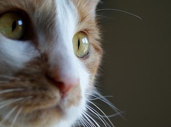 http://historicaldesign.com/wp-content/uploads/2017/09/37-E-Cats-eye-earrings-copy.jpg