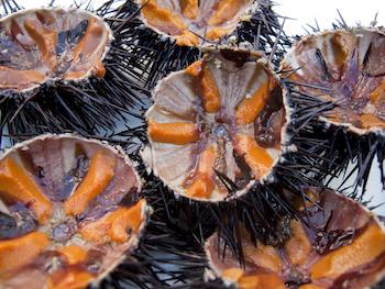 http://historicaldesign.com/wp-content/uploads/2017/09/sea-urchin01.jpg