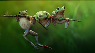 http://historicaldesign.com/wp-content/uploads/2017/10/three_frogs_.jpg